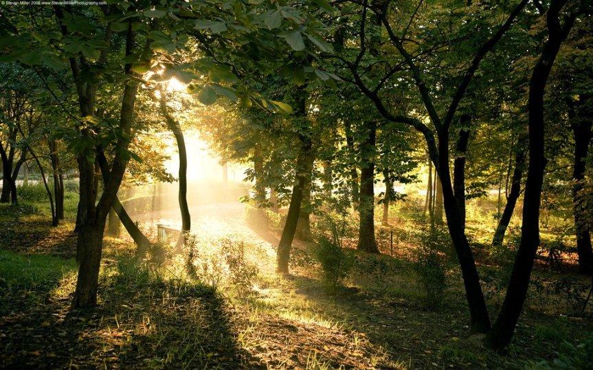 1025959__trees_p